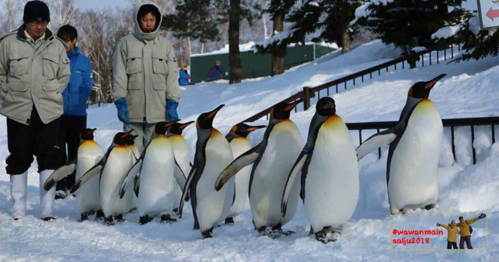 Penguin Walk Asahiyama Zoo - Wawanmainsalju2018