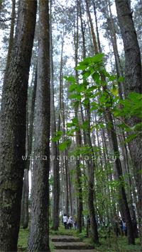 tahura-pohon